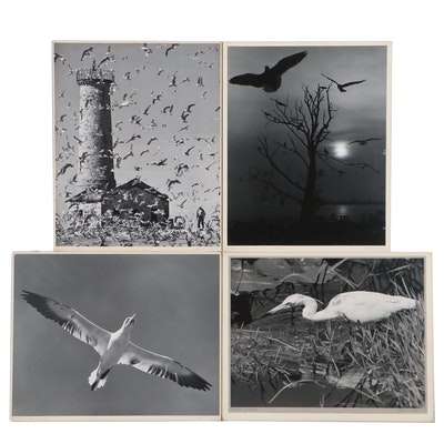 "Grant Haist Silver Gelatin Photographs ""Gannet In Flight"" and More"