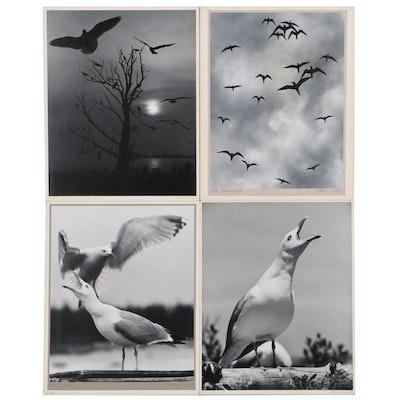"Grant Haist Silver Gelatin Photographs ""Sea Swallows"" and More"