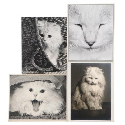 "Grant Haist Silver Gelatin Photographs ""Kitten's Caper"" and More"