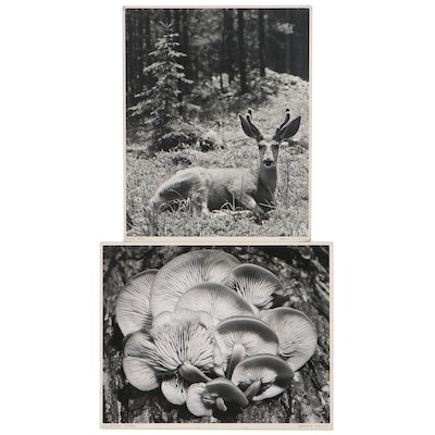 """Grant Haist Silver Print Photographs """"Mule Deer"""" and """"Cluster Fungi"""""""