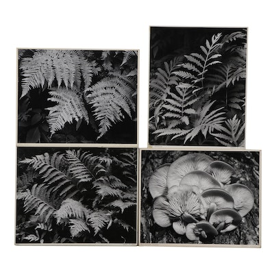 """Grant M. Haist Silver Gelatin Photographs """"Fern Fronds"""" and More"""