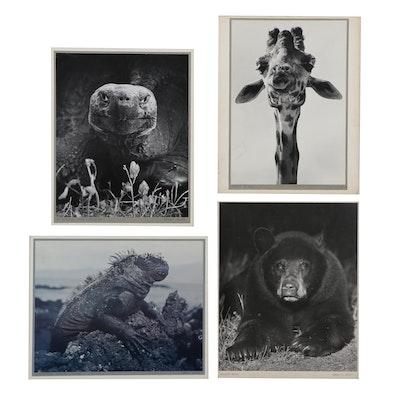 "Grant M. Haist Silver Gelatin Photographs ""Brown Bear"" and More"