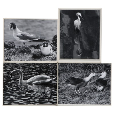 """Grant Haist Silver Print Photographs """"Swan"""" and More"""