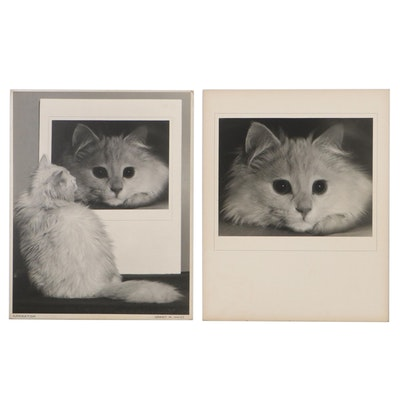 "Grant M. Haist Silver Print Pet Photographs ""Admiration"""