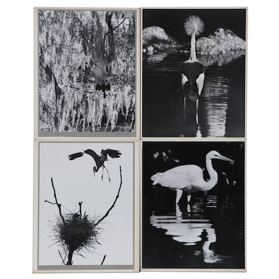 """Grant Haist Silver Print Photographs """"American Heron"""" and More"""