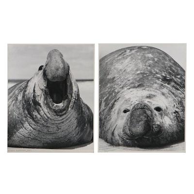 "Grant M. Haist Silver Gelatin Animal Photographs ""Angry Elephant Seal"""