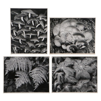 "Grant M. Haist Silver Gelatin Nature Photograph ""Fern Trio"" and More"