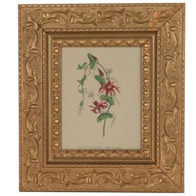 "Botanical Hand-Colored Lithograph Bookplate ""Passiflora Murucuja"""