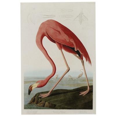 "Giclée After John James Audobon ""American Flamingo,"" 21st Century"
