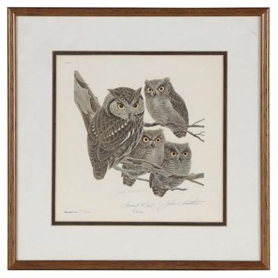 """John A. Ruthven Offset Lithograph """"Screech Owl"""""""