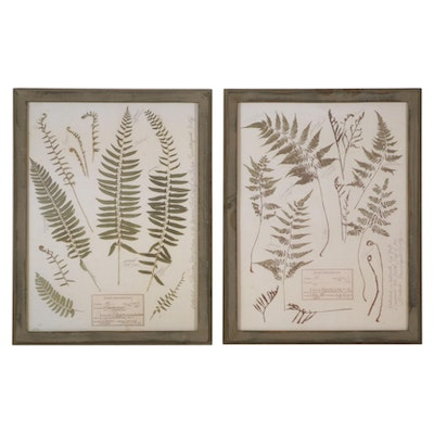 Fern Offset Lithographs After the British Pteridological Society