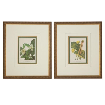 """Offset Lithographs After Mary Vaux Walcott """"Sweet Bay"""" and """"Yellow Pond-Lily"""""""