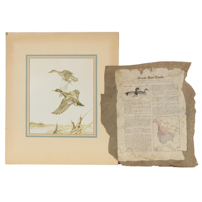 Offset Lithograph After A.H Shortt of Mallard Ducks in Flight