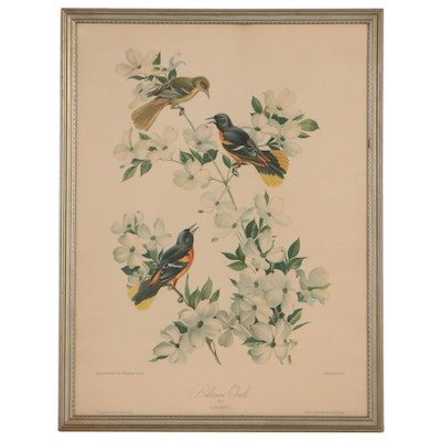 """Offset Lithograph After Roger Tory Peterson """"Baltimore Oriole"""""""