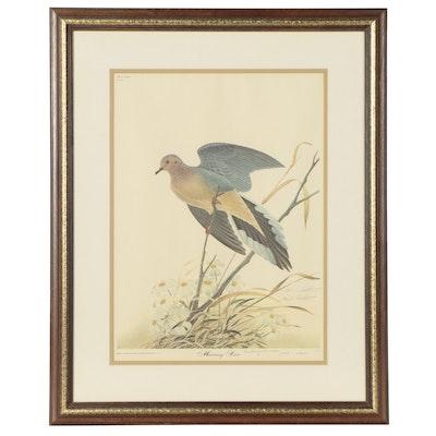 """John A. Ruthven Offset Lithograph """"Morning Dove"""""""