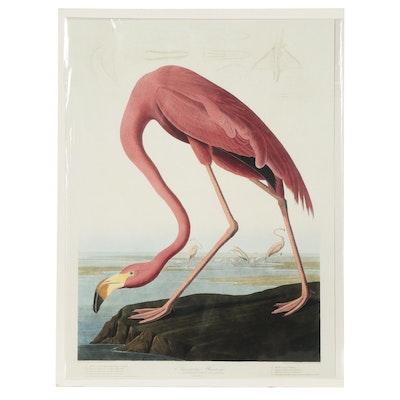 "Offset Lithograph After John James Audubon ""American Flamingo"""