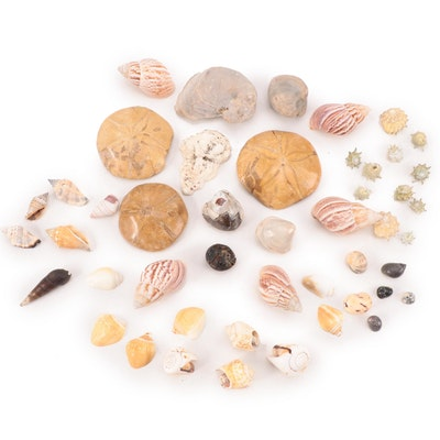 Fossilized Bivalve Mollusks and Sand Dollars with Other Seashells and More