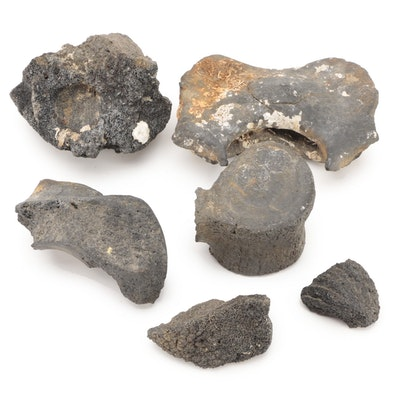 Fossilized Vertebrae with Other Fossilized Bone Fragments