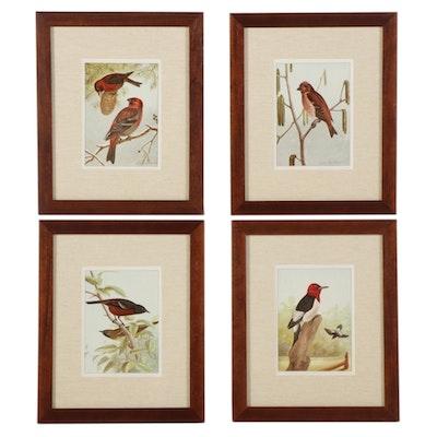 Ornithological Letterpress Halftones After Ernest Seton, Mid-Late 20th Century