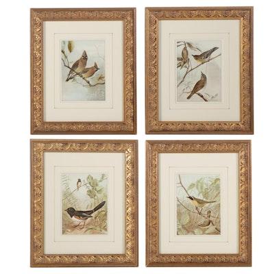 Songbirds Letterpress Halftones After Ernest Seton, Mid-Late 20th Century