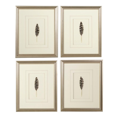Bird Feather Framed Wall Hangings