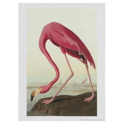 """Giclée After John James Audubon """"American Flamingo,"""" 21st Century"""