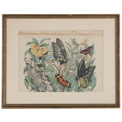 Hand-Colored Engraving of Butterflies Designed by Emil Hanselmann