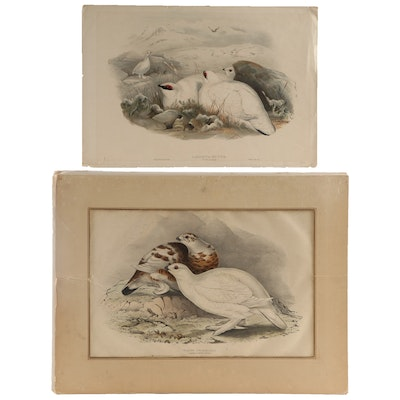 Hand-Colored Lithographs After J. Gould, J. Wolf and H. Richter