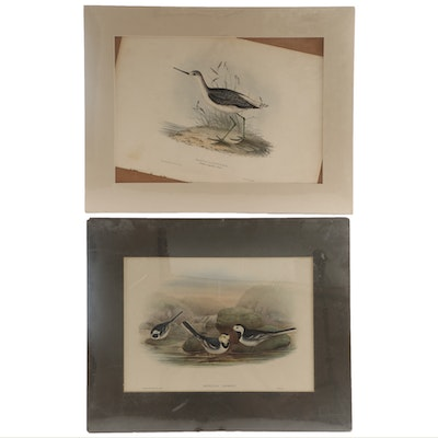 John Gould Hand-Colored Lithographs of Bird Species, 19th Century