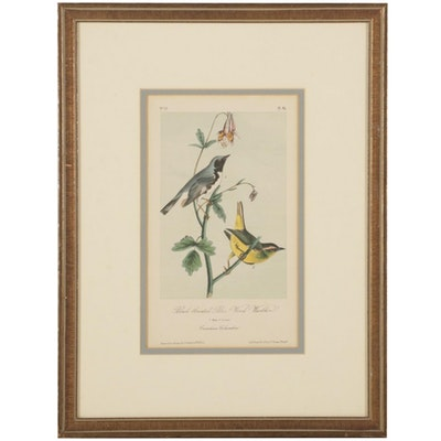 """Hand-Colored Lithograph From Audubon's """"The Birds of America"""""""