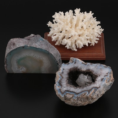 Quartz Geode Mineral Specimens with Scleractinian Fossil Coral Specimen