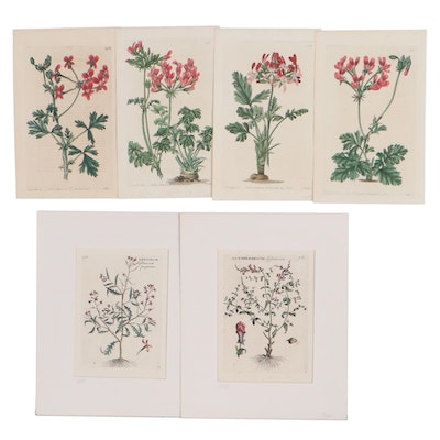 Hand-Colored Etchings of Botanical Illustrations, Early 20th Century